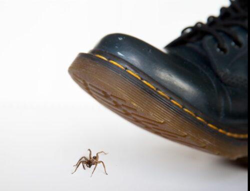 Lacrosse:  Irish Squish #17 Richmond Spiders, 13-5